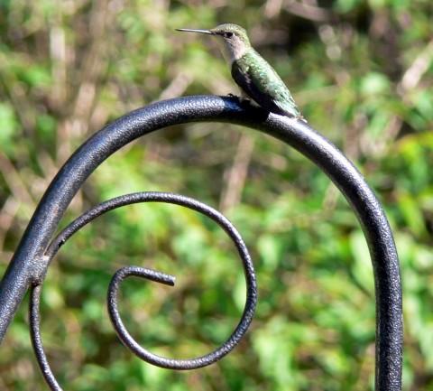 Blog-May_24-14-Hummer on hoop