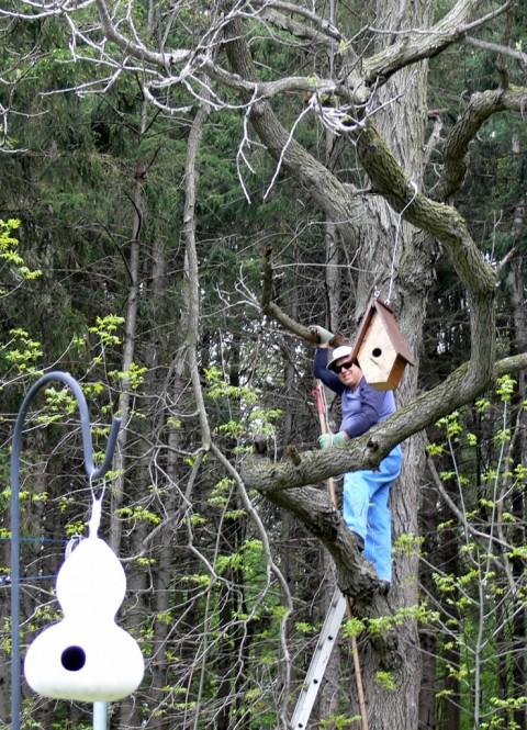 Blog-May_24-14-Jn in tree-1024