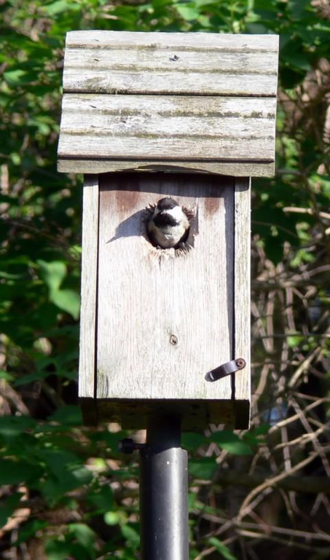Blog-May_25-14-1024-fledgling back home