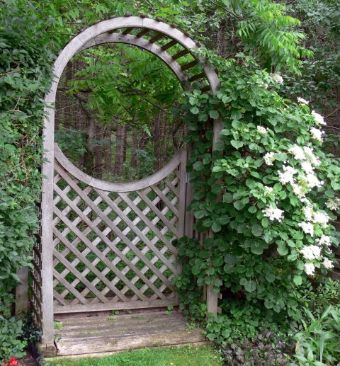 June 18-114-gate-1024-hydrangea
