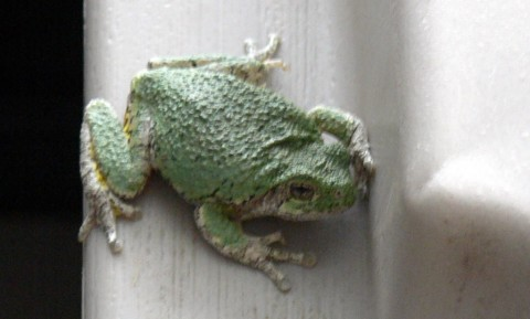 July 14-14-tree frog back-1024-home