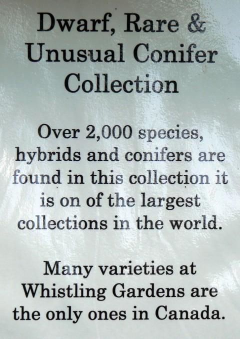 July 15-14-Conifer sign-1024
