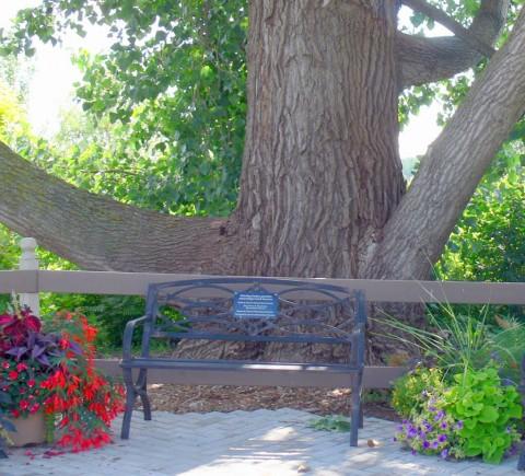 July 15-14-cottonwood-1024- poplar