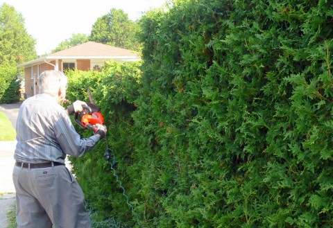 July 18-14-trim-hedge-1024-