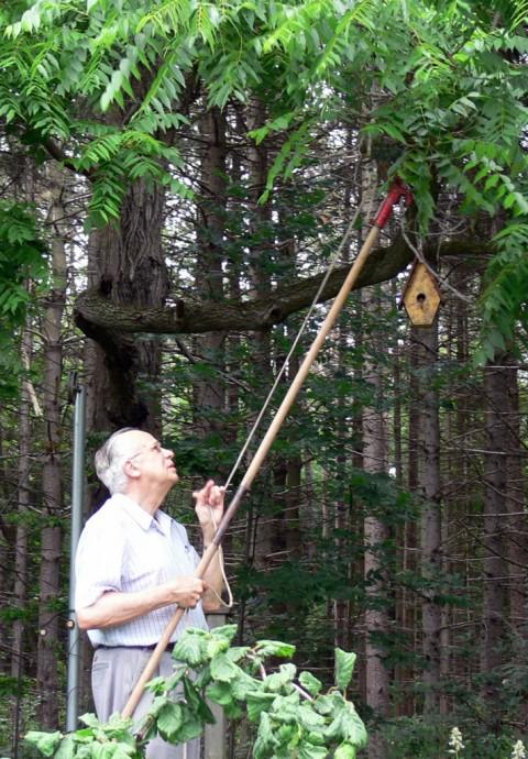 July 2-14-pruning-1024-walnut boughs