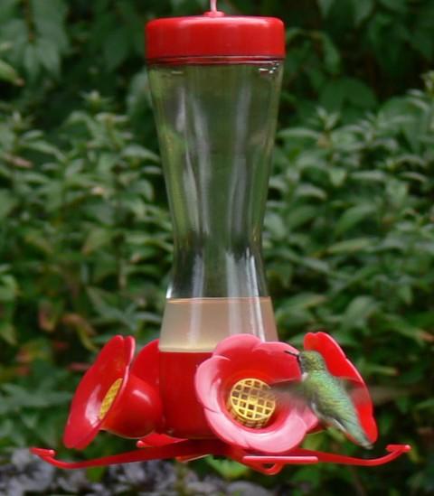 July 29-14-back of hummer-1024-at feeder