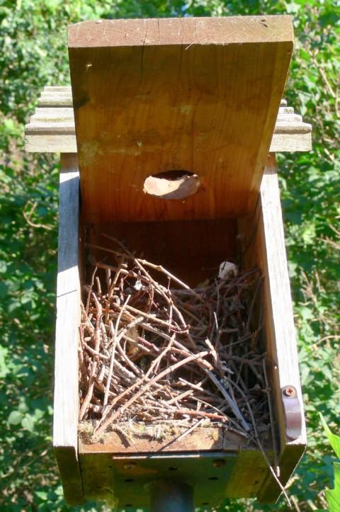 July 4-14-cleaned out-1024-chickadee nursery