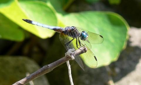 July 7-14-blue dragon-1024-fly