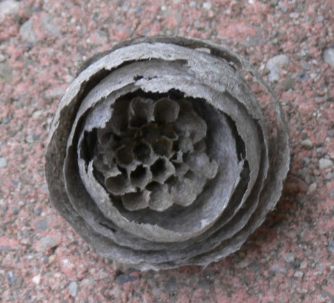 June 30-14-hornet's-1024-nest