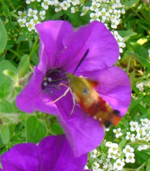 Aug. 4-14-moth