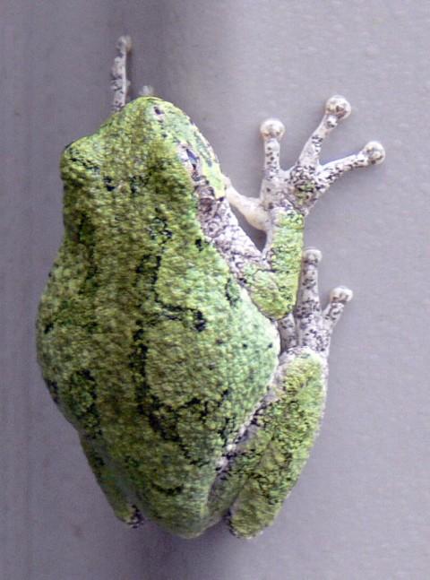 Aug. 4-14-tree frog-1024