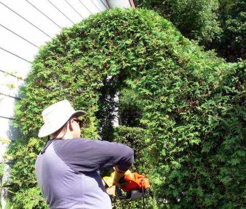 July 31-14-John trims-1024-hedge