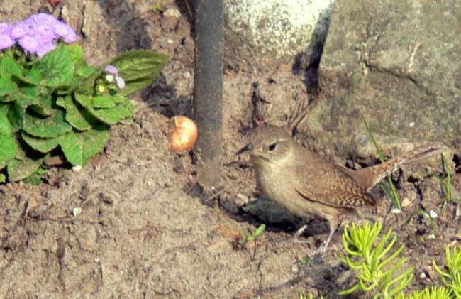 2016-06-10-foraging for twigs
